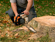 Hire Tree Stump Removal Specialist in Ringwood
