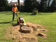 Tree Stump Removal Grinding Experts in Christchurch