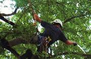 Get Tree Pruning Service at Your Location